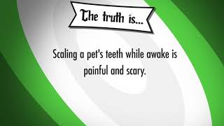 Myth or Fact: Anesthesia-Free Dental Cleanings Are Safe?