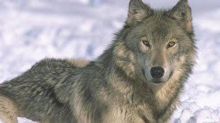 Смотреть онлайн Короткие загадки для детей про животных с ответами