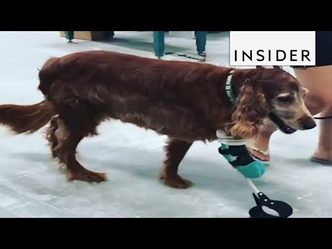 Grateful Dogs Receive Custom Prosthetic Limbs