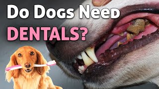 Why is dog dental health important