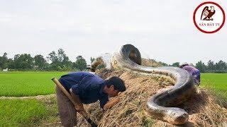 Đào hang bắt rắn| Rắn hổ mang gây bão ở Bình Xuân| Săn Bắt TV