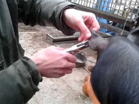 Ang pinakamahusay na gamot para sa bulate para sa mga bata