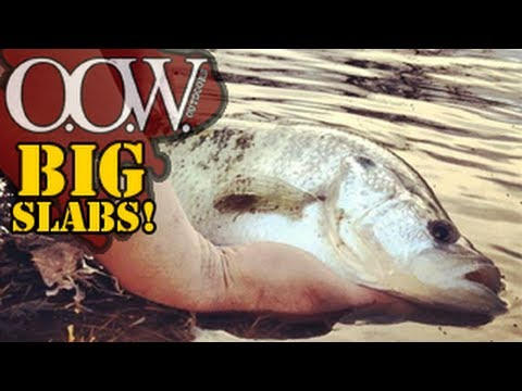 BEST Small pond fishing EVER, Big Bass & SLABBED Crappies – OOW Outdoors