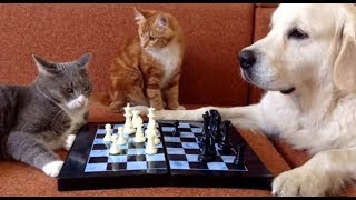 The FUNNIEST ANIMAL COMPILATION ever made🔶