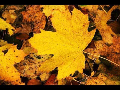 Народные приметы на 4 октября — Кондрат и Игнат