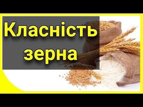 Классность зерна