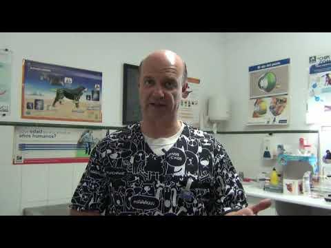 Uramás krónikus prosztatitis