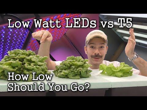 Video: Low Watt LEDs vs T5 Grow Lights: (Seed Starting & Lettuce Test)