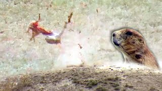 Prairie Dog Hunting Armageddon! Tannerite Explosion - Beyond the Grid