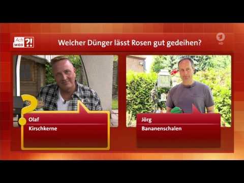 ARD Buffet ach was !  Rosendünger