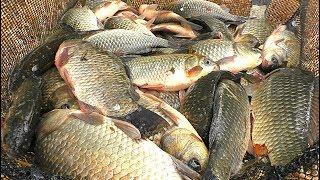 Все о рыбалке ловля карася