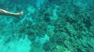 Napoleon. Snorkeling. Red sea. Egypt. Concorde El Salam