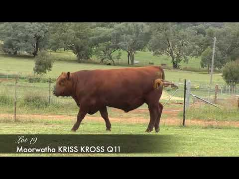 MOORWATHA KRISS KROSS QO11 (AMF) M Q011