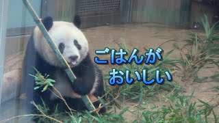 2020.1.24 シャンシャン よく食べ よく寝て ②(Giant panda Xiang Xiang ate a lot.And she has slept well. Part2)
