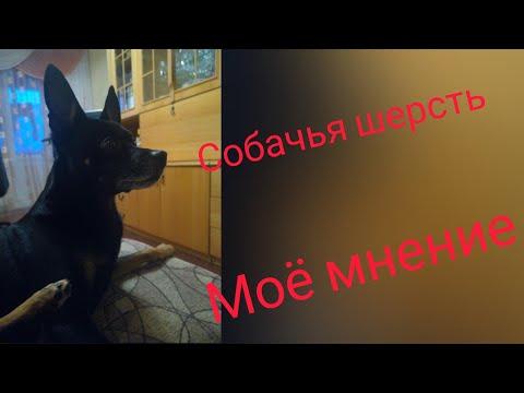 В чём польза собачьей шерсти//чем отличается собачья шерсть от другой// мой взгляд и опыт