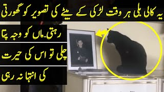 Woman Had Strange Feelings When She Noticed Black Cat Staring At Her Son's Photo