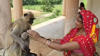 First give foods to langurs and make fun with themselves