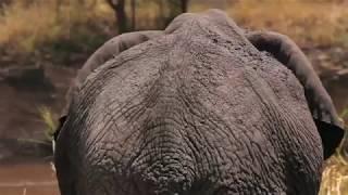TANZANIE - Lamai Serengeti Camp