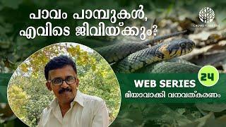 Where do snakes live