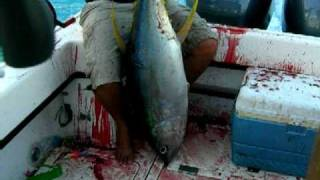 preview picture of video 'Samoa Savaii Siufaga Big Tuna catch Niko'