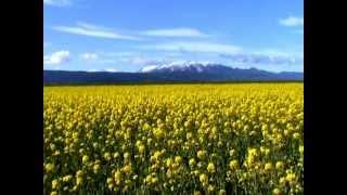 preview picture of video 'Camp de colza a Llívia, maig 2012'