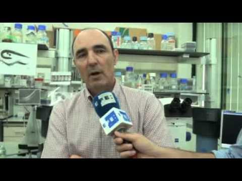 A la limpieza del organismo de los parásitos
