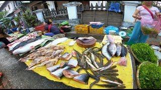 ตลาดเช้าหลวงพระบาง สปป.ลาว EP1. มีแต่แนวแซ่บ ของป่า ปลากด หลายคัก