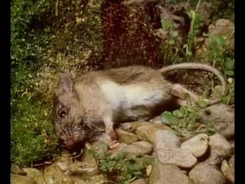 Pinag-aaralan ng mga parasites sa katawan