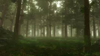 Celtic Druid Astrology: What Tree Does Your Soul Descend From