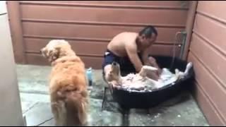 Смотреть онлайн Собака принимает ванну