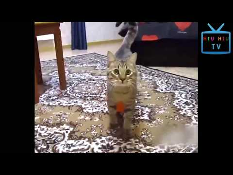 Funny Animal Mating - Funniest Cats vs Balloons and Water Balloons Compilation
