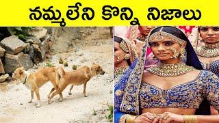 నమ్మలేని నిజాలు|Interesting FACTS|Unknown And Amazing Facts In Telugu|CTC Facts