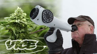 The Gadget That Measures How Strong Your Weed Smells