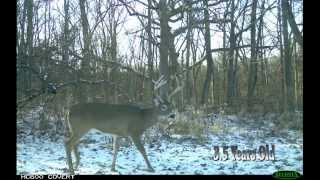 Determine a Buck's Age Just by Looking at It - Deer Hunting