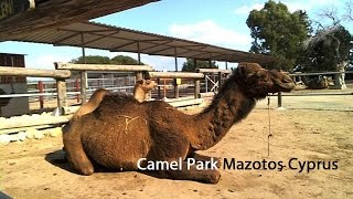 preview picture of video 'Camel Park Mazotos Cyprus - Zypern Urlaub / Cyprus Holidays'