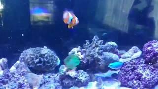 Ikan Nemo Free Video Search Site Findclip