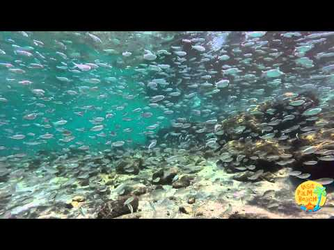 Video Snorkeling the beautiful Palm Beaches with Visit Palm Beach