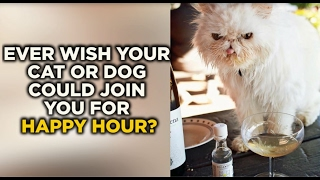 Colorado company makes wine for cats and dogs