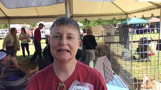Gretchen Frederick, of Solitude Wool, talks about Romney sheep