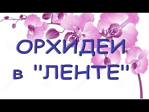 """ОРХИДЕИ:завоз в """"ЛЕНТЕ"""",14.08.21,Самара,ул.Физкультурная,141."""