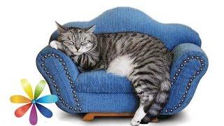 Смотреть онлайн Как из старых вещей сделать диванчик для кота