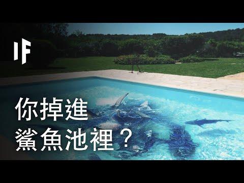 掉進鯊魚池別緊張