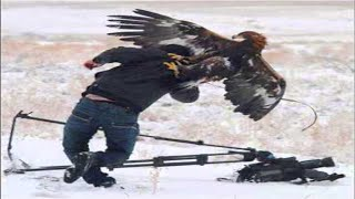 Best Eagle Attacks (GRIZZLY, KANGAROO...&MAN) HD