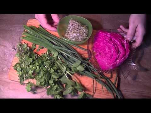 Мокрица. Витаминный салат из мокрицы с проростками люцерны.