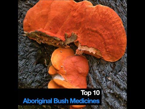 Video Top 10 Aboriginal Bush Medicines