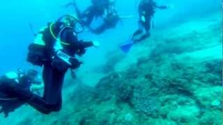 preview picture of video 'GoPro Hero 3 dive Mozambique mashup'