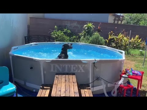 Dog Splashes Water in the Pool – 1133227-1
