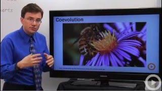 Evolution - Coevolution