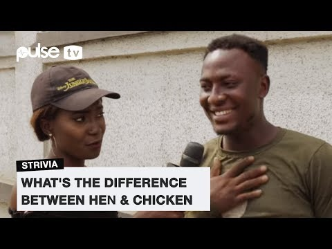 Hen And Chicken, What's The Difference | Pulse TV Strivia