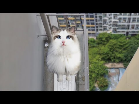 天外降下來的幸福(貓咪救援)